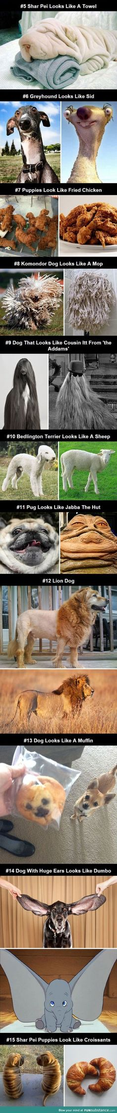 Cats & Dogs Images: Dogs That Look Like Other Things cute animals dogs adorable dog puppy animal pets lol puppies humor funny pictures funny animals funny pets funny dogs Funny Animal Quotes, Animal Jokes, Funny Animal Pictures, Cute Funny Animals, Cute Baby Animals, Dog Pictures, Funny Dogs, Funny Quotes, Humor Quotes