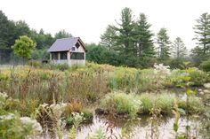 Garden designer Julie Moir Messervy, the author of Landscape Ideas That Work… Garden Ponds, Water Garden, Room Of One's Own, Magic Forest, Green Mountain, Vermont, The Great Outdoors, Backyard, Exterior