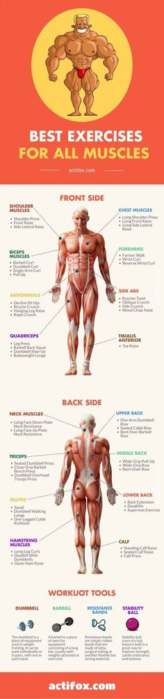 The Best Muscle-Building Exercises For Every Body Part actifox.com/... What Is The Best Full-Body Workout For Muscle Gain? Here's a list of the best weight training exercises for each muscle group including chest, back, shoulders, biceps, triceps, quads and hamstrings. A detailed look at the most potent muscle building exercises, as well as a bodypart by bodypart breakdown. Stop wasting time. Improve your strength and achieve optimal muscle tone wit