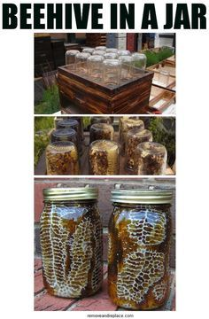 DIY Beehive in a Jar - Backyard Honey with this easy project. LOVE! Honey with comb, already made inside of a mason jar!