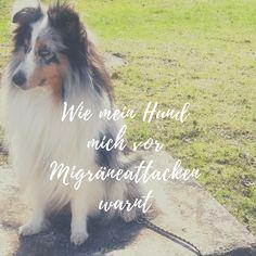 Blog Post über Migräne und das natürliche Anzeigeverhalten mancher Hunde
