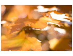 Maple Leaves Abstract Yellow Fall Color by SierraMtnArtPrints