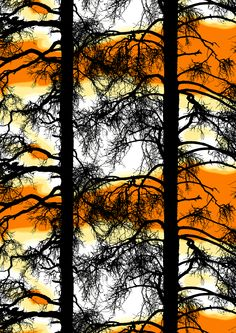 Kelohonka (carrot) - By Tanja Orsjoki