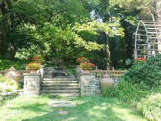 Pwe's Ramblings: Our tour of Morris Arboretum