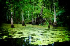 Get my 7 FREE basic photography tips - you NEED to know right here; http://pw5383.wixsite.com/free-photo-tips | Photographer Pernille Westh | Swamp near New Orleans, Louisiana