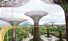Singapore's Gardens by the Bay. Photograph: Getty Images