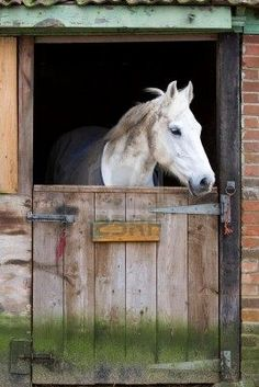 white horse behind a wooden stable door Stock Photo My Horse, Horse Love, Pretty Horses, Beautiful Horses, Wild Horses, Country Life, Country Living, Farm Life, Farm Animals