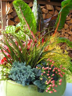 Conifers in containers landscape