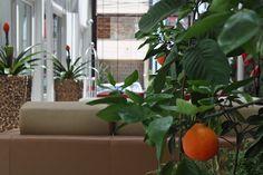 Un Naranjo al lado del muro Vivo Boutique, Home, Walls