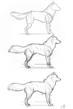 how to draw animals Fluffy Dog step by step from whisperpntr. on deviantART, . - Fluffy Dog step by step from whisperpntr.devia on deviantART, drawing animals - Animal Sketches, Drawing Sketches, Cool Drawings, Sketch Art, Drawing Tips, Drawing Ideas, Dog Drawing Simple, Sketching, Cute Dog Drawing