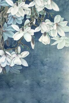 Purchase White Flowers Paintings Photography Backdrops Photo Props Studio Background from Ann Pekin Pekin on OpenSky. Flower Backgrounds, Flower Wallpaper, Wallpaper Backgrounds, Iphone Wallpaper, Wallpaper Ideas, Phone Backgrounds, Chinese Painting, Chinese Art, Arte Floral