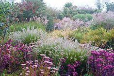 File:Siergrassen in september. Prairie Planting, Prairie Garden, Farmhouse Garden, Garden Cottage, Linden Gardens, Garden Plants, Vegetable Garden, Garden Art, Herb Garden