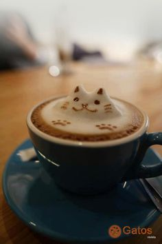 Perfect combination - coffee and cats