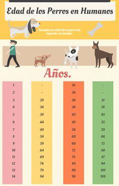 Averigua la edad de los #Perros en comparación de la tuya.
