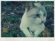 Cat @ Bedok Reservoir by Pam