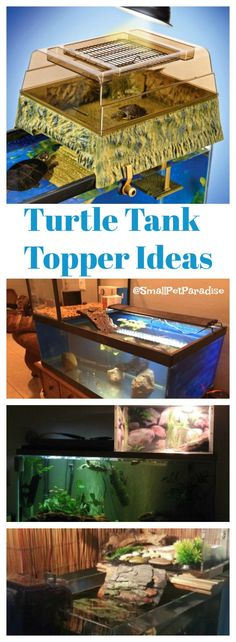 Turtle Tank Topper Ideas You Are Going To LOVE!