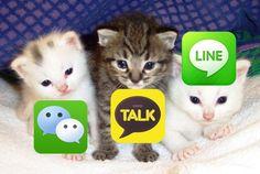 kakaotalk wechat line cats