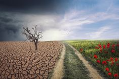 The Connection Between Seasonal Allergies, Climate Change, and Mental Health - One Green PlanetOne Green Planet World Environment Day, Sea Level Rise, Climate Change Effects, Greenhouse Gases, Will Turner, Global Warming, Pathways, Ecology, Climate Change