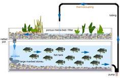 Garten-und Landschaftsbau: Aquaponics System Detailed Information
