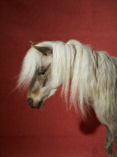 Celine Horse