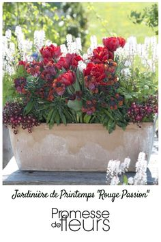 bulbes de printemps en pot 5 id es d 39 association jardini res et pots de fleurs pinterest. Black Bedroom Furniture Sets. Home Design Ideas