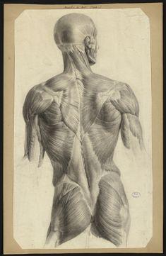 Jacob, Nicolas-Henri. - Dessins préparatoires pour le Traité complet de l'anatomie de l'Homme de J.-M. Bourgery [s.l.] : [s.n.], 1810-1831.   http://www.biusante.parisdescartes.fr/histmed/medica/page?ms00081&p=26
