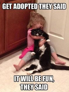 """Get adopted they said...this is totally Bebe and Athos. We are ALWAYS saying"""" put the cat down!"""""""