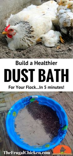 Your chickens will dust bathe naturally, so why not build them a healthier spot to get rid of mites and lice? This dust bath contains soil and diatomaceous earth - and takes only 5 minutes (and less t (Chicken Backyard Ideas) Portable Chicken Coop, Best Chicken Coop, Backyard Chicken Coops, Chicken Coop Plans, Building A Chicken Coop, Chicken Tractors, Pallet Chicken Coops, Dust Bath For Chickens, Raising Backyard Chickens