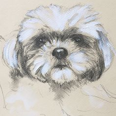 Dog Sketch Custom Dog Portrait 8 x 10 by SketchbookGallery on Etsy Custom Dog Portraits, Pet Portraits, Picture Tattoos, Tattoo Pics, Lhasa Apso, Creative Artwork, Cartoon Design, Dog Paintings, Pictures To Paint