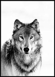 Wolf B&W Poster in de groep Posters / Afmetingen / 50x70cm bij Desenio AB (3548)