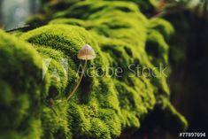 Mushroom in summer green forest – tuto apodobné fotografie naleznete ve službě Adobe Stock | Adobe Stock Dandelion, Green, Flowers, Plants, Summer, Photography, Image, Fotografie, Floral
