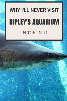 Why I'll Never Visit Ripley's Aquarium in Toronto: http://justinpluslauren.com/ripleys-aquarium-in-toronto/