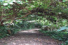 » Blog Archive Awesome hikes at Hacienda Baru |