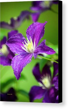 Clematis Canvas Print by Christina Rollo.  All canvas prints are professionally printed, assembled, and shipped within 3 - 4…