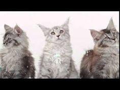 Purina ONE XMAS Video 2014 - YouTube