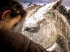 horse moman