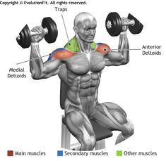 SHOULDERS -  ARNOL PRESS