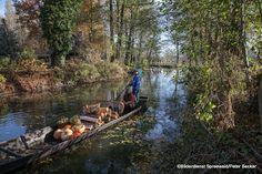 Herbst im Spreewald entdecken
