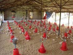 Poultry Breeds, Poultry Farming, Chicken Rearing, Poultry Business, Protein Shop, Small Chicken Coops, Cow House, Poultry House, Chickens Backyard