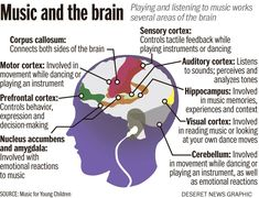 Music helps learning-disabled children because music and the brain are the ways kids learn easier. Give your learning disabled child music lessons. Music Words, Music Quotes, Motor Cortex, Music And The Brain, Corpus Callosum, Brain Facts, Deaf People, Brain Science, Music Therapy