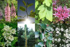 Noen vekster truer det biolgiske mangfoldet i Norge. Styr unna risikoplantene - naturvernforbundet.no