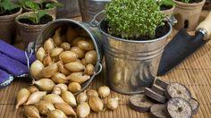 Pickles, Cucumber, Stuffed Mushrooms, Beans, Vegetables, Fruit, Food, Stuff Mushrooms, Essen