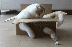 Develop problem-solving skills. | 21 Lessons You Can Learn From Cats InBoxes