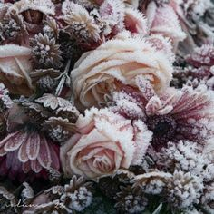 A wintery mix by @Eva S. Thing