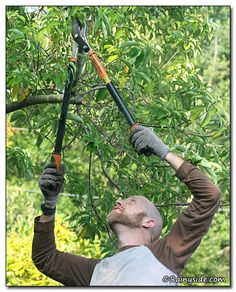 "Fiskars Power-Lever Bypass Loppers -- You will like how it ""cuts branches like buttah""."