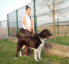 Central Asian Shepherd, My Dog