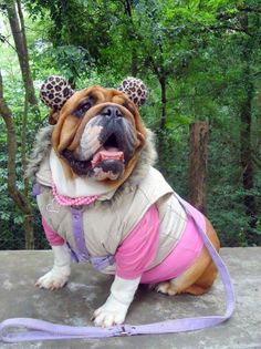 ❤ Prepared for any occasion ❤ Posted on Baggy Bulldogs