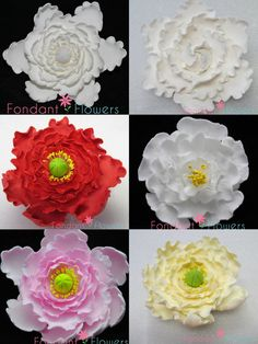 Gumpaste Peony Flowers  Red White Pink Yellow  by FondantFlowers, $4.99