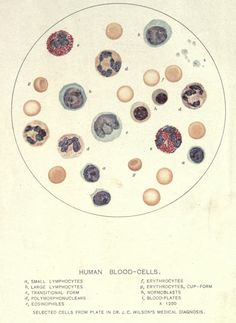 What your blood cells look like