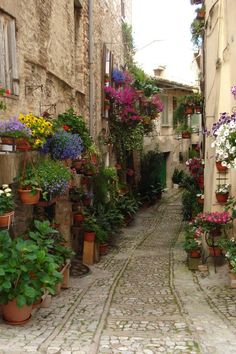 Orvieto -, Umbria region, Italy *  beautiful flowers in a stunning hill top town!    I loved this place!